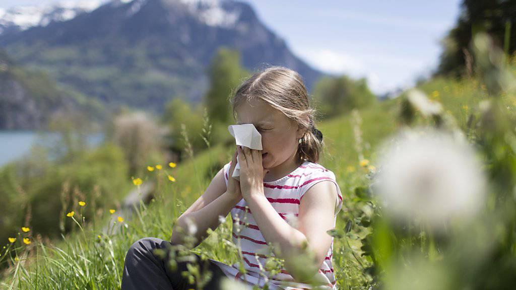 Allergikerinnen und Allergiker sollen sich künftig jederzeit darüber informieren können, wo gerade welche Pollen fliegen. (Symbolbild)