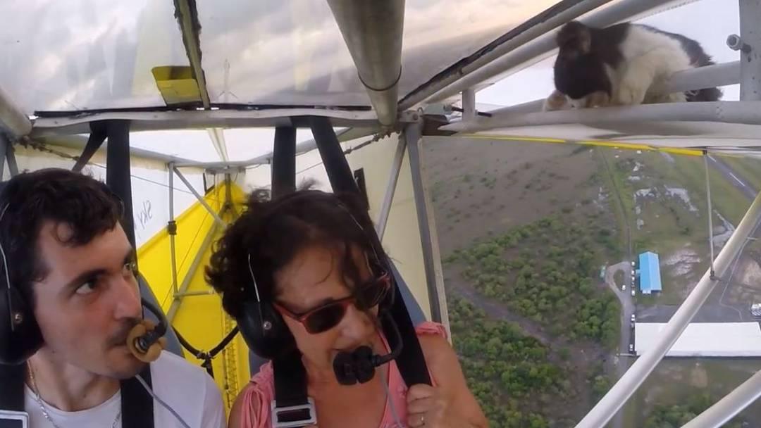 Eine Katze als blinder Passagier eines Ultarleichtflugzeugs
