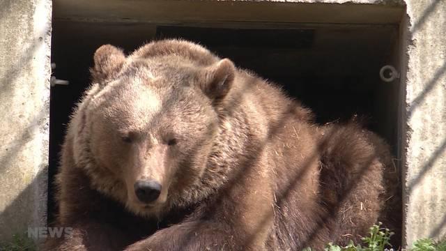 Bären erwachen aus langer Nacht