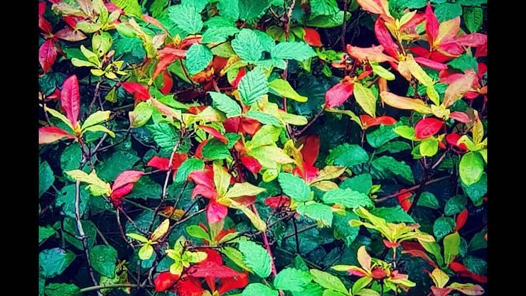 Herbstbild, Hanspeter Studer Bellach