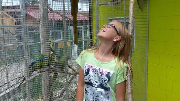 Die Papageien begeistern Kinder.