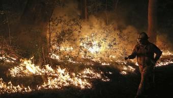 Buschfeuer in Australien