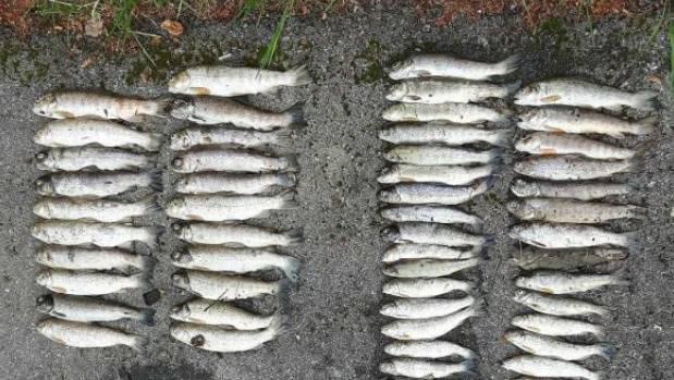 In Bennwil wurden tote Fische entdeckt. (Symbolbild)