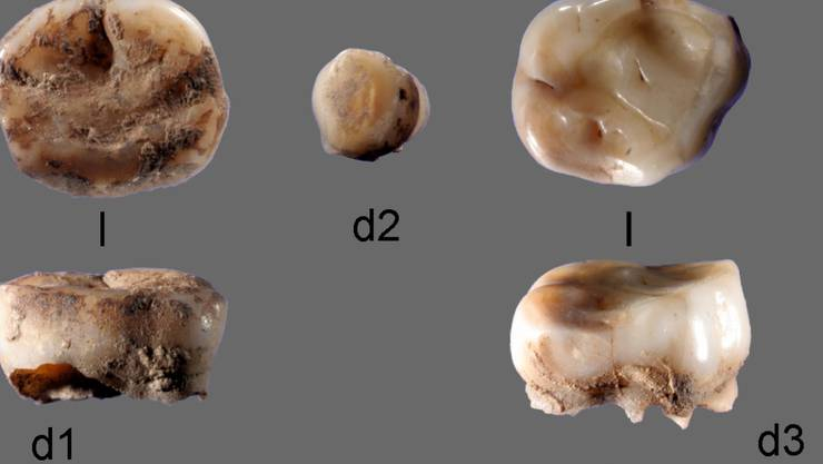 Das internationale Forschungsteam stiess in einer archäologischen Ausgrabungsstätte am russischen Fluss Jana auf zwei 31'000 Jahre alte Milchzähne. Die untersuchte DNA zeigte, dass die Zähne zu Individuen einer bislang nicht bekannten Bevölkerungsgruppe gehörten