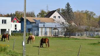 Auf dem Grundstück zwischen Dänikerstrasse und Walkerstrasse grasten bis zu zehn Pferde.