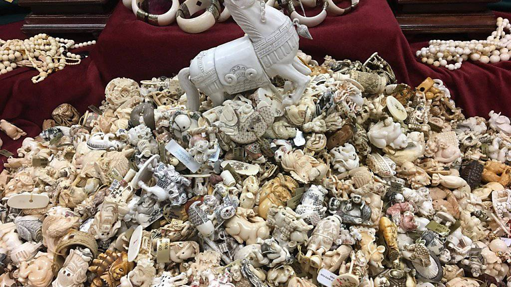 Im Central Park in New York sind als Zeichen gegen Wilderei und den illegalen Handel mit Elfenbein zwei Tonnen Elfenbein zerstört worden.  Stosszähne, kunstvolle Schnitzereien, Schmuck und weitere kleine Objekte im Wert von Millionen von Dollar wurden zu wertlosem Pulver zerschlagen.
