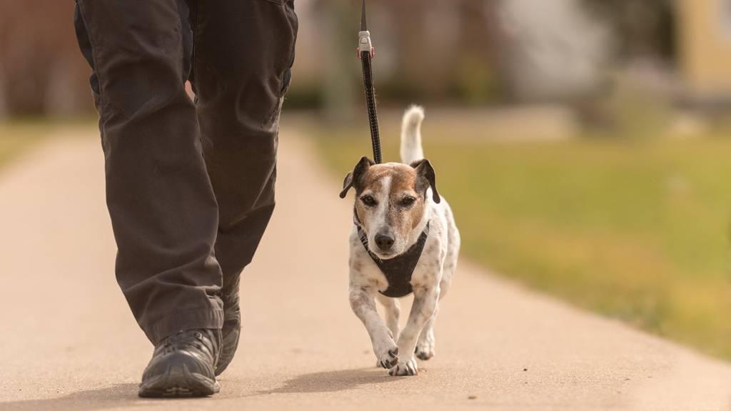 In Wil müssen Hunde an die Leine genommen werden.