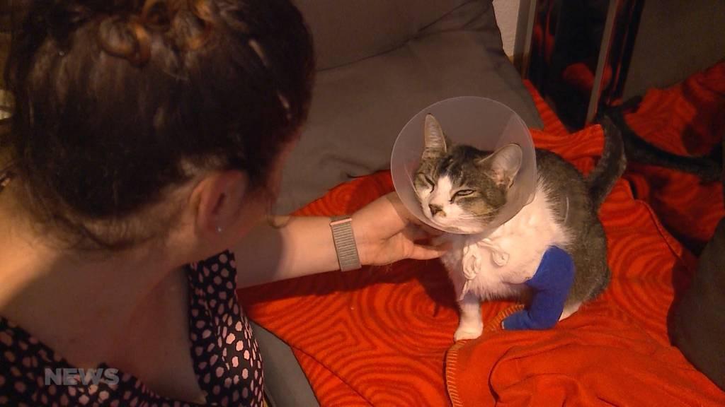 Tierquälerei in Olten: Katze mit Schrot angeschossen