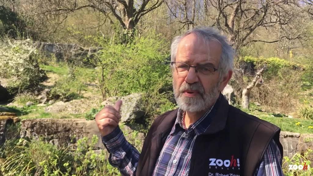 Abschied beim Zoo Zürich: Kurator Robert Zingg geht in Pension
