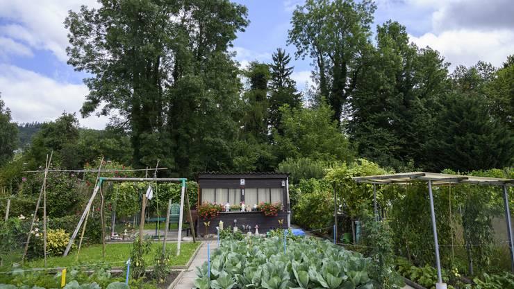 Im Schlieremer Betschenrohr hat es rund 350 Gärten – rund die Hälfte davon soll wegkommen.