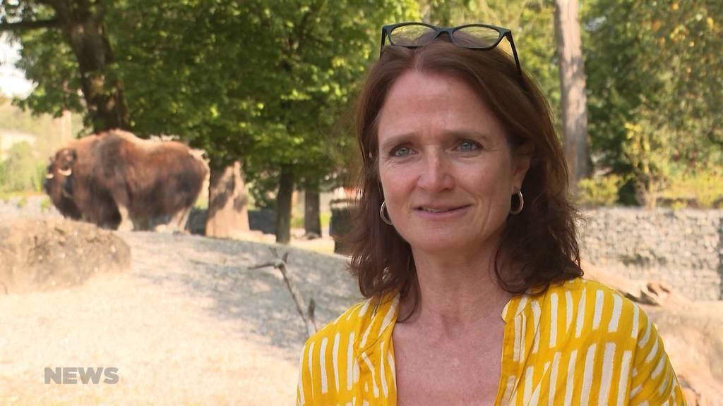 Beim Moschus-Ochse geht ihr das Herz auf: Die neue Tierparkdirektorin tritt in grosse Fussstapfen