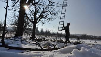 Winterlandschaft: Hans Bräm schneidet auf dem Dietiker Hof seines Sohnes die Bäume.