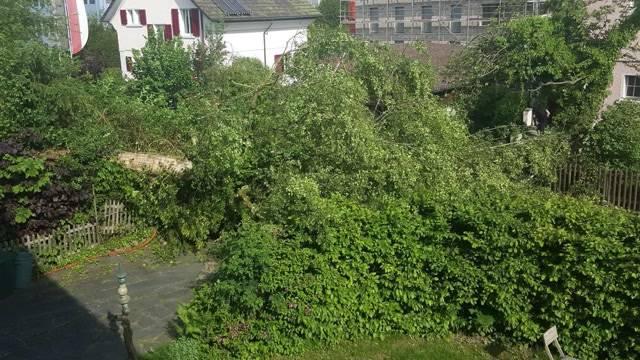 Baum legt Strasse in Aarau lahm