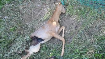 Plastikzäune: Todesfalle für Rehe