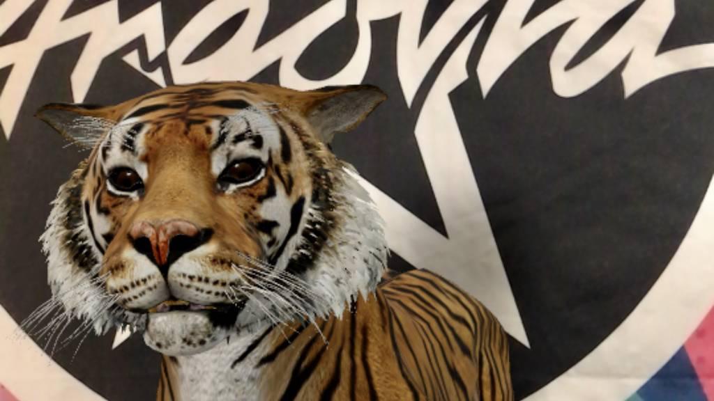 Wie kommt ein Tiger ins Argovia Studio?
