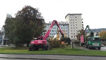 Voraussichtlich sollte die Rotbuche auf dem Schlieremer Stadtplatz anfang dieses Jahres gefällt werden (Archiv).