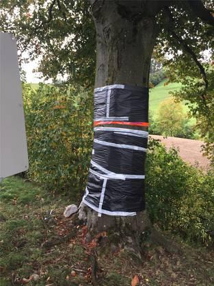 Nach dem Unfall im Herbst 2017 wurde der Baum verarztet. (Archiv)