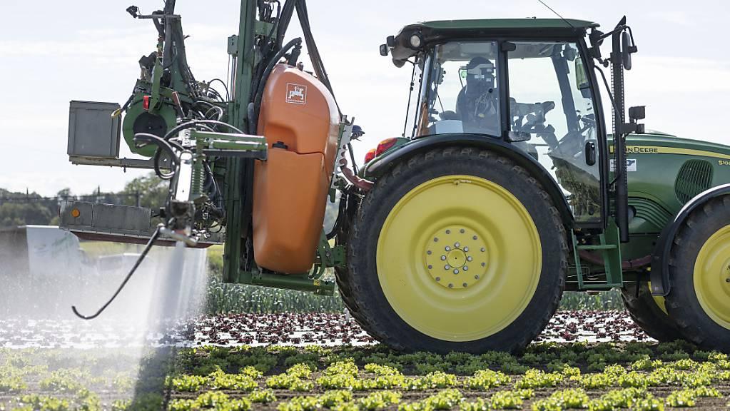 Das Stimmvolk will kein Verbot von synthetischen Pestiziden. Das ergibt die Trendrechnung im Auftrag der SRG zur Pestizidinitiative. (Archivbild)