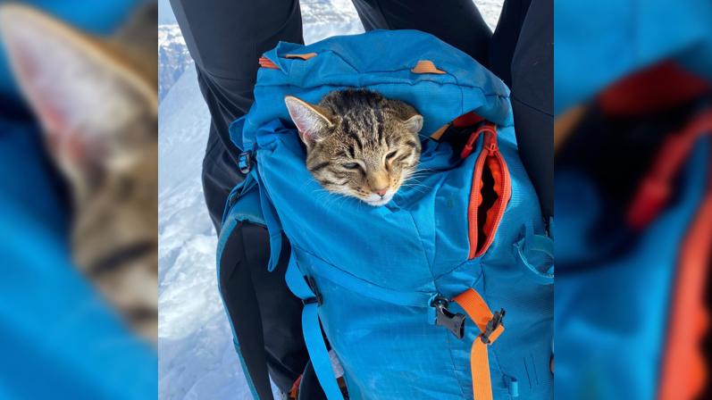 Katze begleitet Bergführer auf den Bristenstock – und wieder zurück