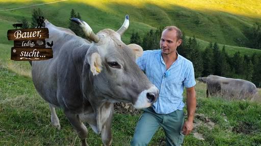 Nur das Beste für Hansuelis Kühe