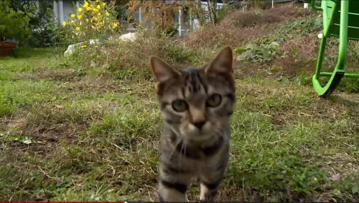 Selber hat er aber auch ein Büsi: Das Tigerli Milli. Milli ist aber nur in seinem Garten unterwegs.