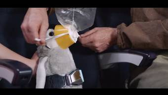 Nicht irgendein Sicherheitsvideo, sondern das «coolste der Welt», wie sich Air New Zealand findet.
