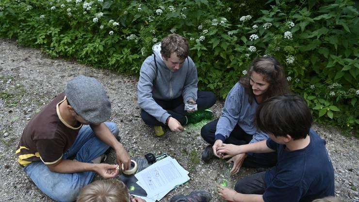 Glühwürmchen-Exkursion Juna. Die Jugendgruppe Solothurn auf einer Exkursion zum Mürgelibrunnen bei Wangen a.A., einem kleinen Solothurner Naturschutzgebiet, wo es Glühwürmchen haben soll. Leiterin Véronique Schifferle hat die Regionalgruppe wieder erweckt, Leiter Tobias Richter ist Spezialist für Glühwürmchen. Mit dabei die Buben Nelson, Finn, Miles und Leo. Im Bild: Glühwürmchenfallen.