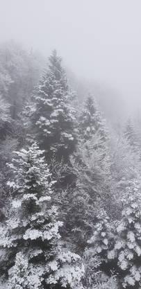 Aus dem Gondeli aufgenommen: schneebestäubte Tannen auf dem Weg auf den Hausberg.