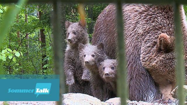 Zu Besuch im Tierpark Dählhölzli