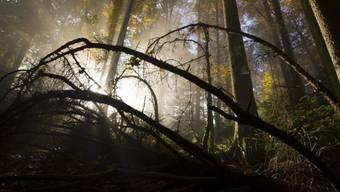 In einem Waldstück zwischen Bad-Säckingen und Wehr-Brennet, direkt ennet der Grenze, entdeckte die Fussgängerin den Toten. (Symbolbild)
