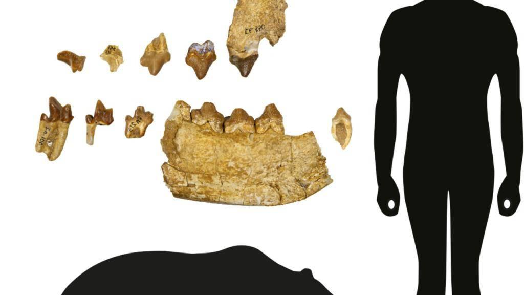 Grösster Fleischfresser der Urzeit lebte in Egerkingen