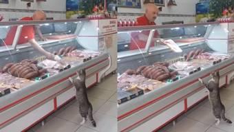 Hier geht eine Katze beim türkischen Metzger einkaufen.