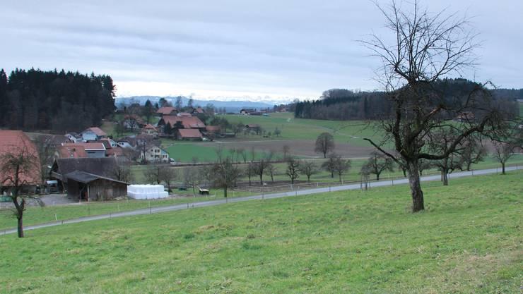 Auf diesem Grundstück in Küttigkofen soll Wein angebaut werden.