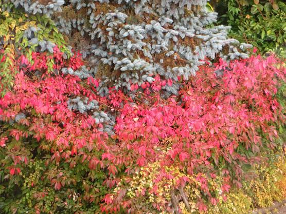 Das ist die Schönheit der Jahreszeiten, hier einfach der Herbst.