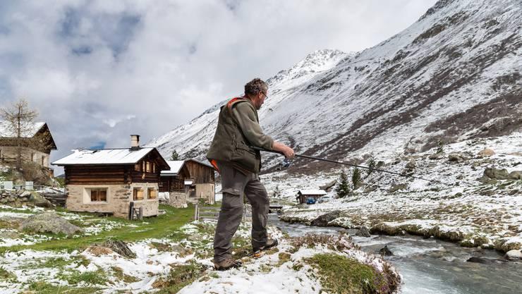 Schnee im Mai? Die Eisheiligen sorgen mancherorts für einen kurzen Kälteeinbruch. (Archiv)