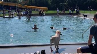 Am Sonntag gehört die Badi Schöftland den Vierbeinern: Saisonabschluss ist das Hundeschwimmen.