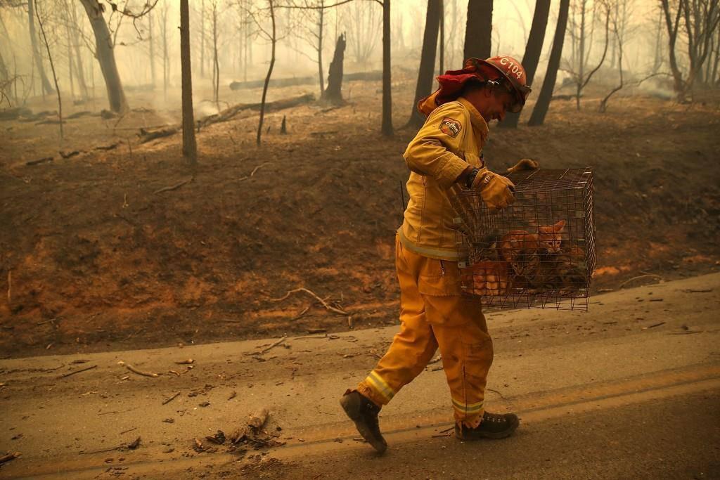 Verheerende Brände in Kalifornien
