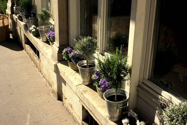 Auf ihren Fenstersimsen haben die Basler bereits wieder Blumen deponiert.
