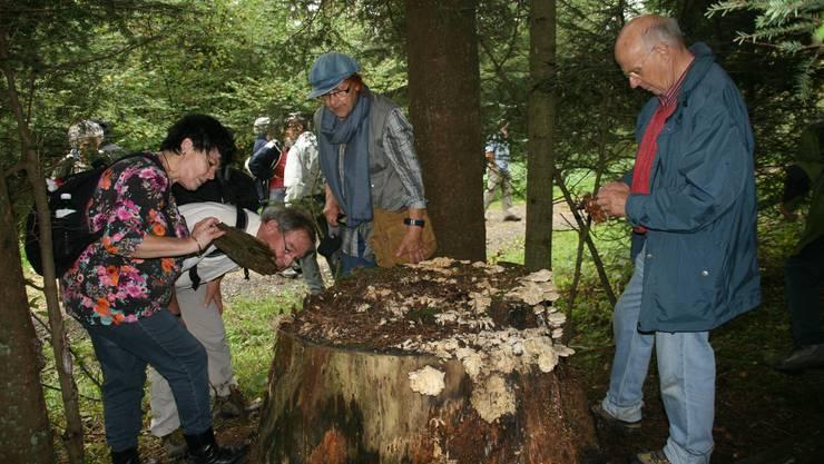 Pilze faszinieren die Teilnehmer der Exkursion am Waldtag in Dietikon