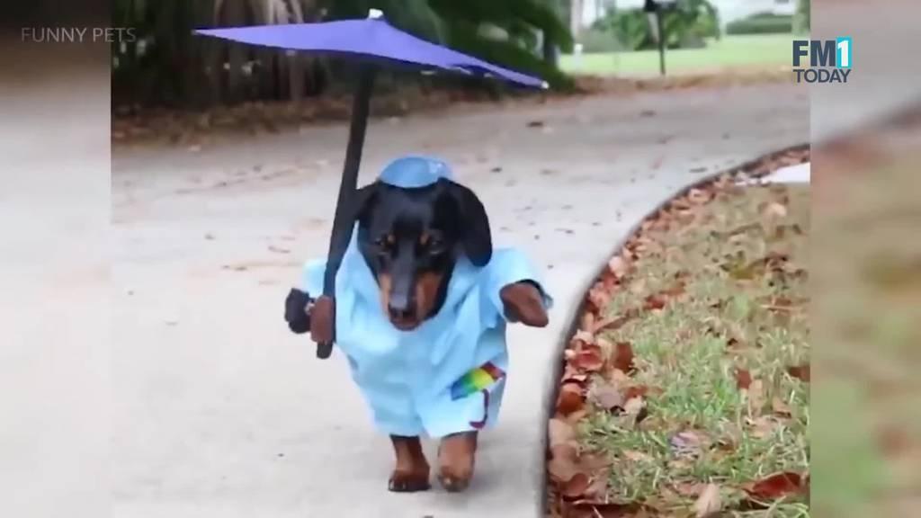 Die coolsten Halloween-Kostüme für deinen Hund