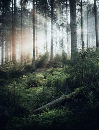 Die Fichtenwälder im Harz sind dicht und üppig. Der Nationalpark Harz gehört mit 600 Kilometern Wanderwegen zu den grössten Deutschlands.