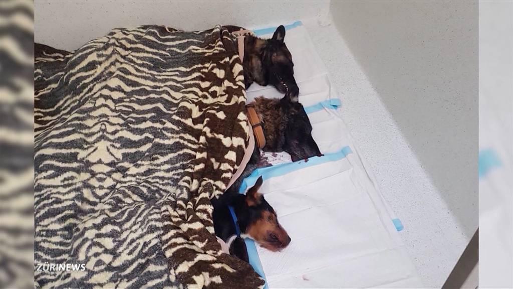 Hundehalterin soll ihre Hunde nicht selber getötet haben