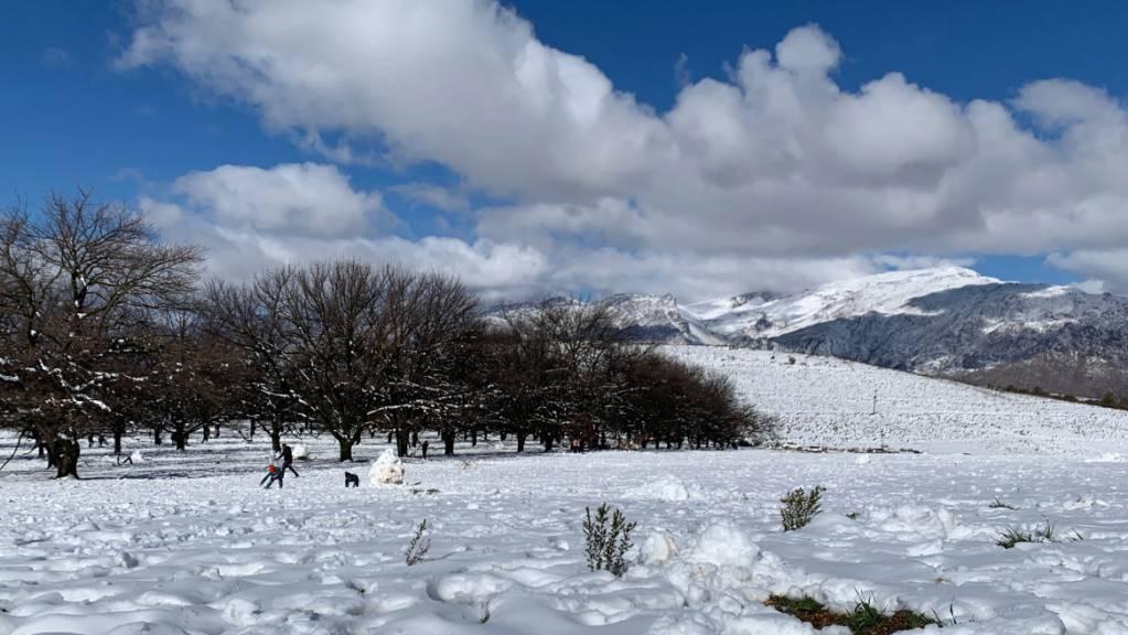 Eine geschlossene Schneedecke hat sich in der Nähe von Ceres am Westkap von Südafrika gebildet.