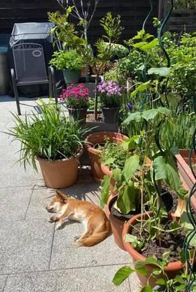 «Ausflugsziel: Gardenien», schreibt uns eine Leserin und schickt uns dieses Foto ihres Gartens dazu.