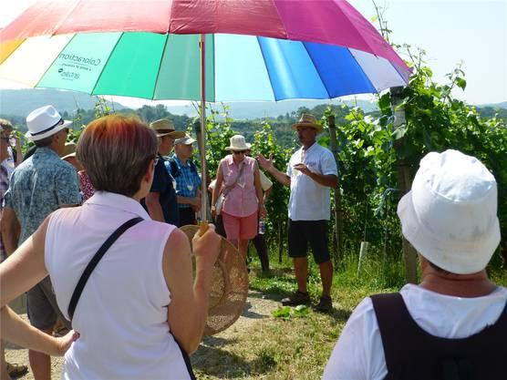 Meinrad Keller (2. von rechts) informiert über das Wachstum der Trauben.