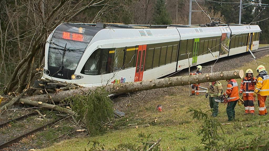 Wald (ZH): S-Bahn kollidiert mit Baum