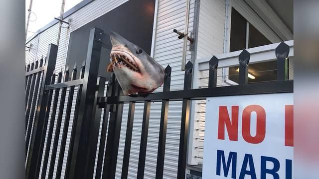 Unbekannte spiessen Hai-Kopf auf Zaun