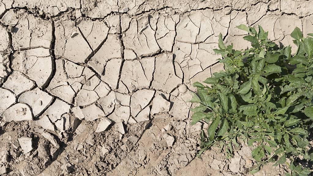 Hitze und Trockenheit werden infolge der Klimaerwärmung zu einem grösseren Problem werden. Der Kanton Schaffhausen hat am Montag seine Klimastrategie präsentiert. (Symbolbild)