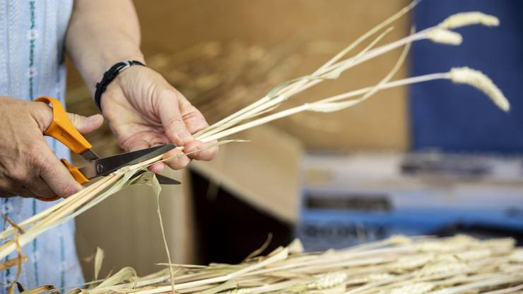 Claudia Künzi schneidet das Getreide für Stroh-Trinkhalme am Mittwoch, 3. Juli 2019, in Maschwanden. Familie Künzi produziert seit 30 Jahren Stroh für Dekogetreide.
