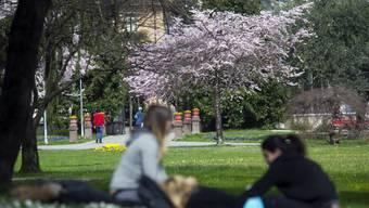Der Frühling kommt diese Woche zurück. Temperaturen bis 19 Grad.